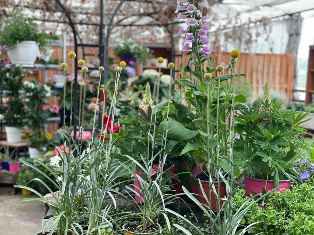 Ausstellungsraum von Blumen Wahl mit einer großen Auswahl von Blumen und mehr!
