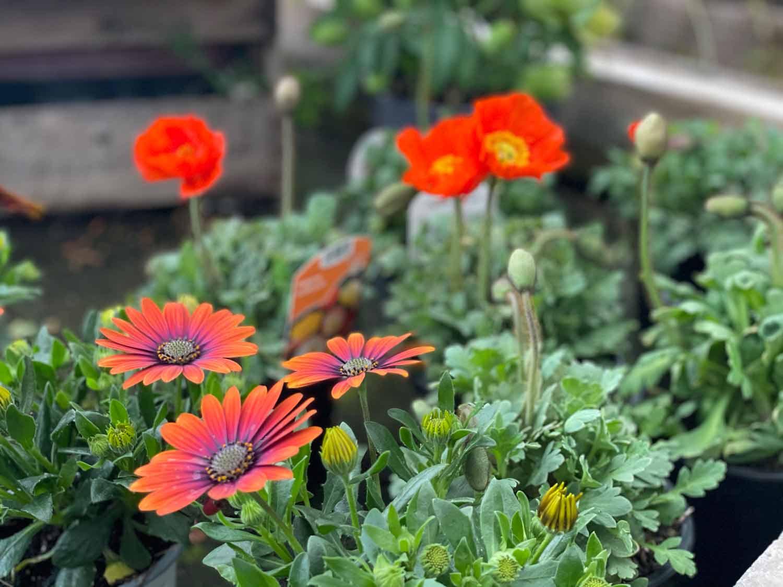 Nahaufnahme von Blumen bei Blumen Wahl!